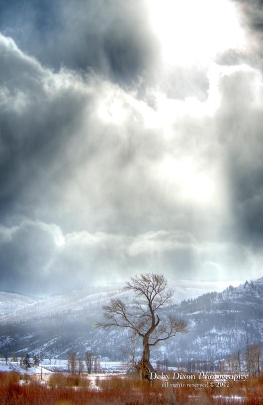 My Favorite Yellowstone Tree