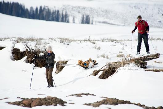 skiing759001